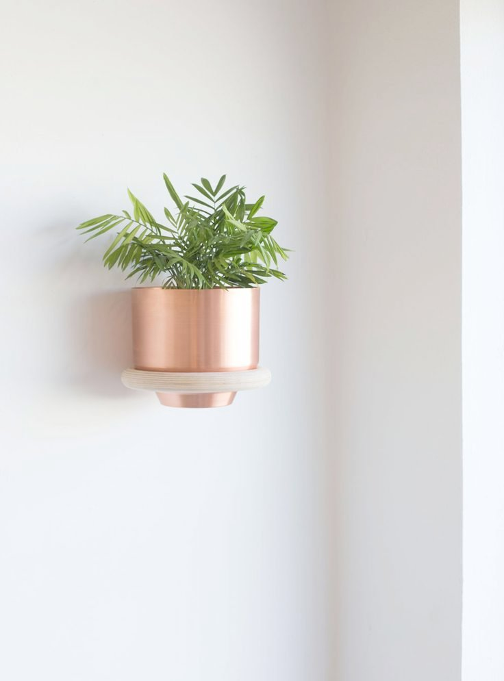 Delightful Indoor Wall Mounted Plant Holders   Backordered   Ring Wall Mount