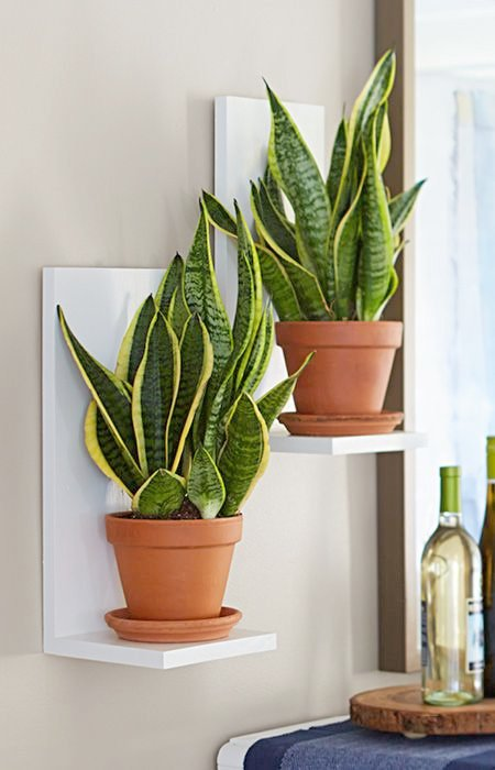 Indoor Wall Mounted Plant Holders   Bring Sansevieria To Eye Level With Easy To Make Two Board Wall Planters · Hanging  Plant DiyIndoor ...