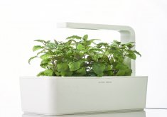 Amazing Inside Garden Kit   Trendy Indoor Herb Garden At Bold Design Indoor Garden Kits Nice Ideas  Indoor Herb Garden Kits