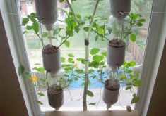 Attractive Hydroponic Window Garden Diy   DIY  Hydroponics From Window Farm Kids Would Love To Be Apart Of This.