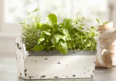grow herbs indoors kit
