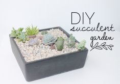 Marvelous Diy Succulent Garden   DIY Tutorial | How To Make A Succulent Garden